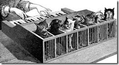gatos maullando